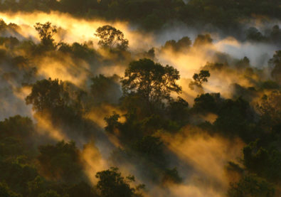 Tropical Forests Are Losing Their Ability to Soak Up Carbon热带雨林正在丧失吸收碳的能力